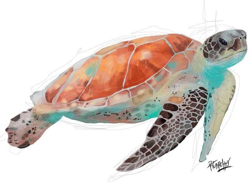 retrato tortuga de mar de perfil